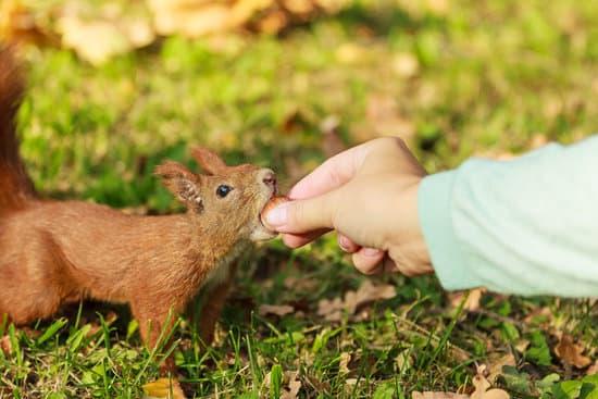 a man feeding a squirrel