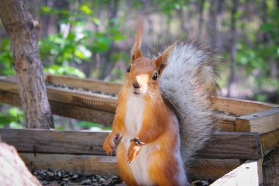 Squirrels rarely attack humans