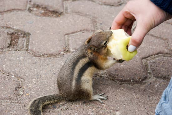 Do Squirrels Like Apples?