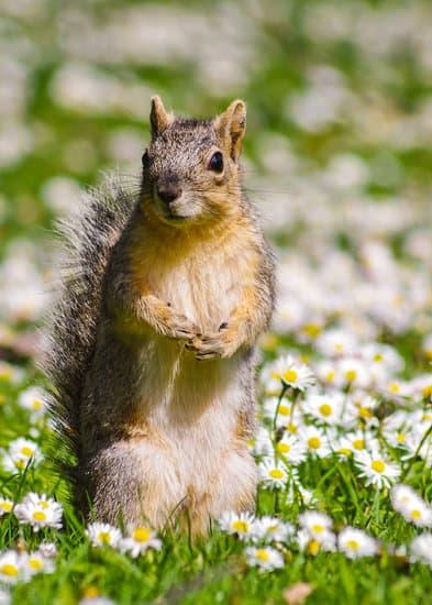 Hmm no! Squirrels won't kill you