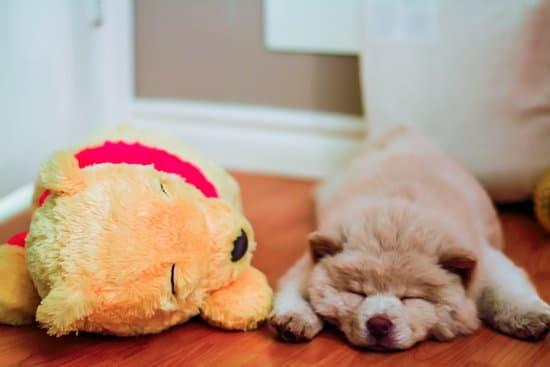 Why Do Baby Chows Sleep So Much?