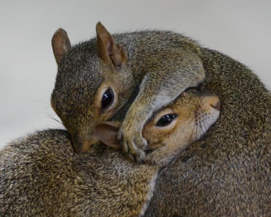 Do Squirrels Mate For Life