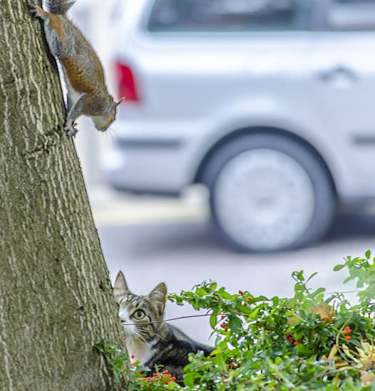 squirrel and cat chasing one another