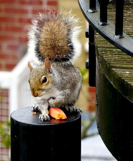 squirrels love carrots