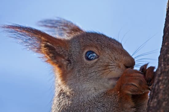 do squirrels blink? yes they do
