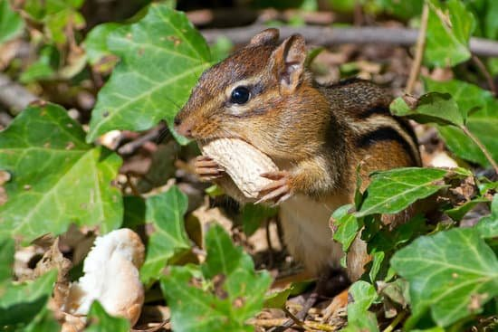 Do Squirrels And Chipmunks Fight?