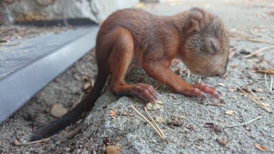 a healthy baby squirrel