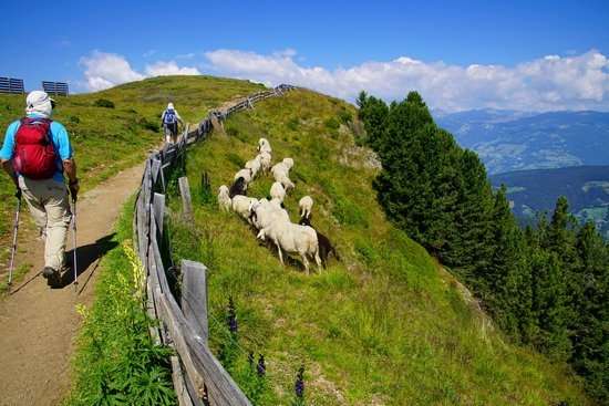 Hikers Pass Sheep Grazing High on the Hills