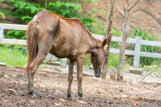 Can You Treat A Sick Horse?