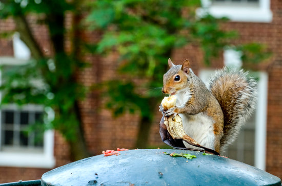 Do Squirrels Eat Bananas?