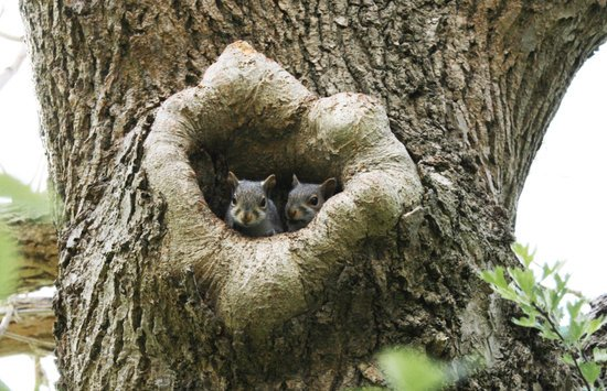 Do Squirrels Sleep In The Same Nest Every Night?