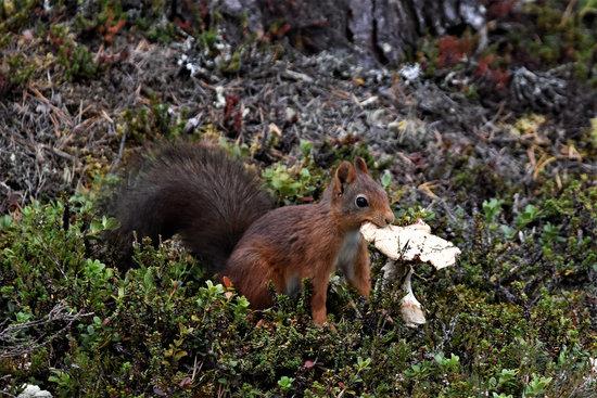 do squirrels eat mushrooms