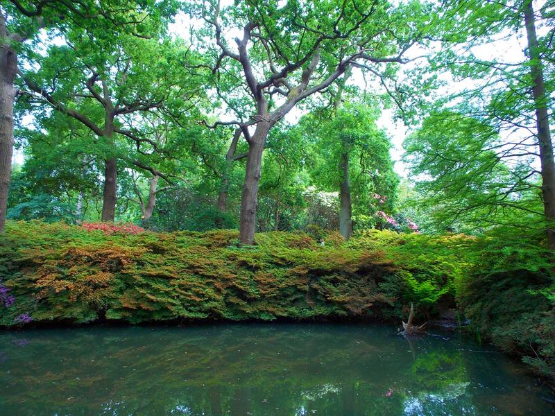 peaceful greenery