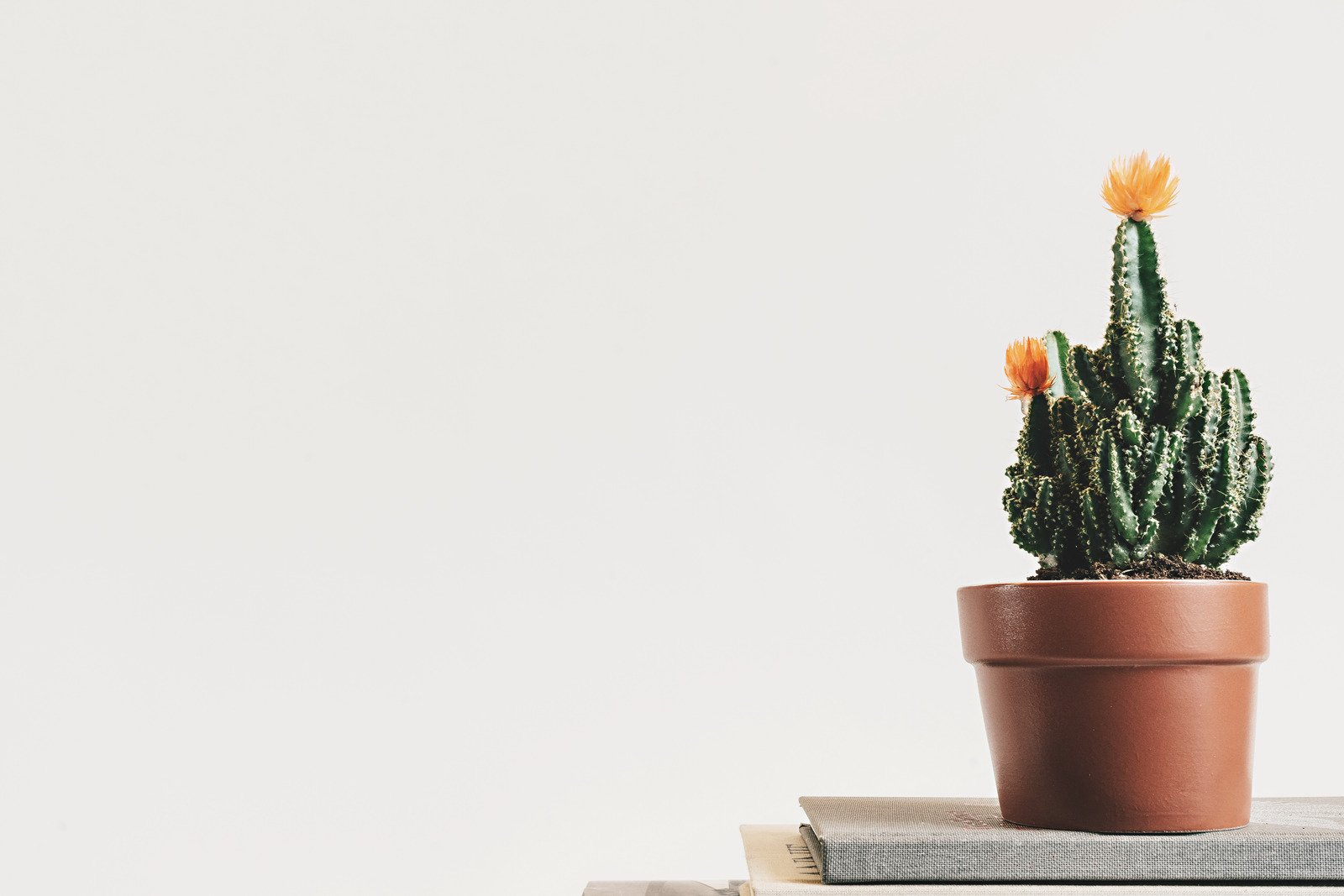 Green Cactus Plant on Pot