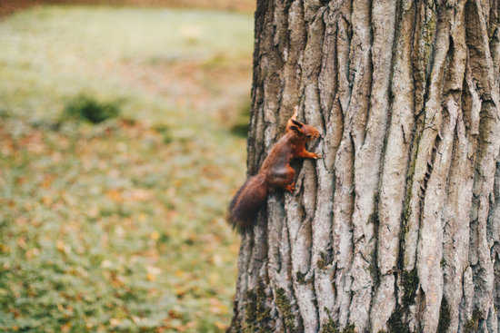 Brown Squirrel Crawling on Tree - Photos by Canva