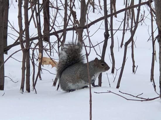 squirrels shiver to keep warm in winter