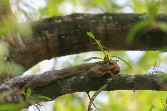 squirrels lay flat to escape from danger