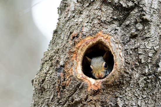 Do Squirrels Give Live Babies?