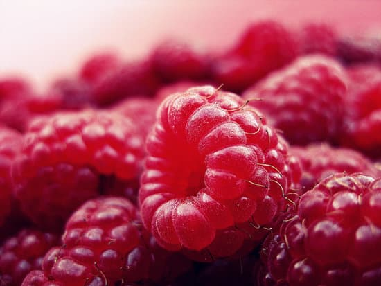 Can Bearded Dragons Eat Raspberries? Do raspberries beneficial to bearded dragons?