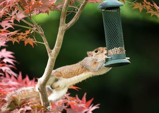 how to avoid squirrels in bird feeders