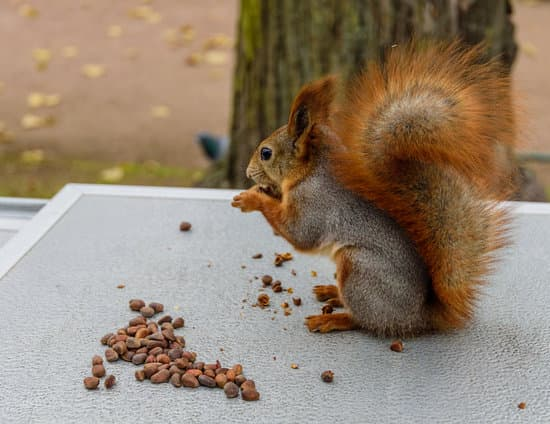 Why Do Squirrels Shake Their Tails?
