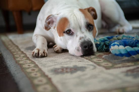 Staffordshire Bull Terrier small pitbull breeds