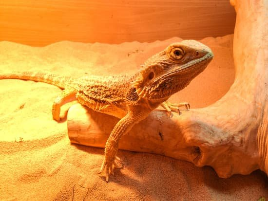 Why Do Bearded Dragons need Basking Bulb?