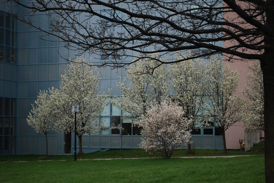 Trees Blooming by Building