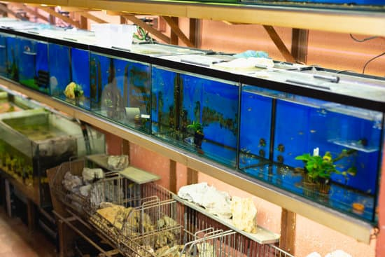 How Much Do Uromastyx Cost At Pet Stores?