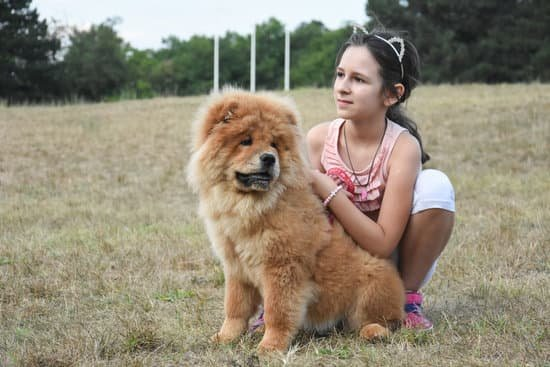 How Smart Chow Chows Are?