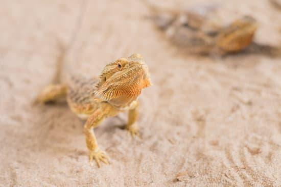 Impact on Desert Based Species