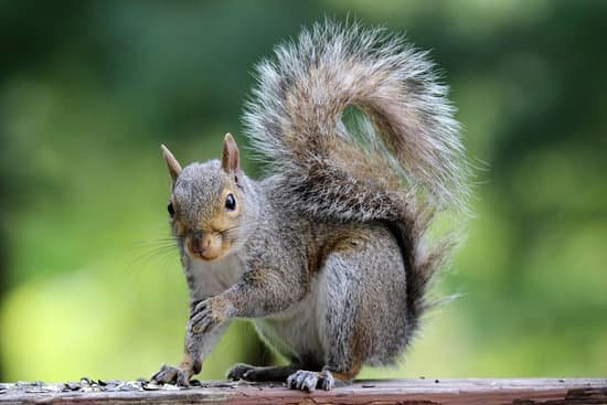 Squirrels do not actually like mice
