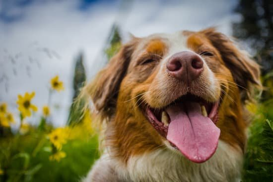 One year of a dog's life is equal to 6.07 years for a human.
