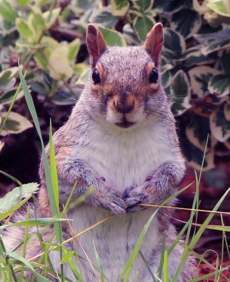 squirrel barking at me because its sacred