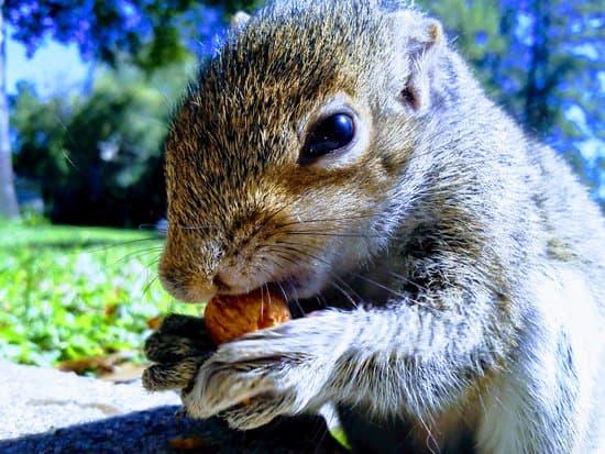 Juvenile & Adult Squirrels Diet