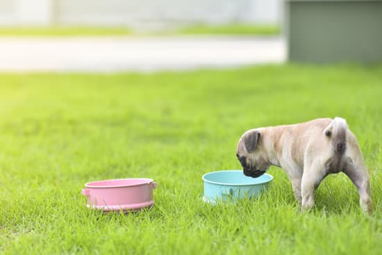 Benefits of Blueberries For Pugs