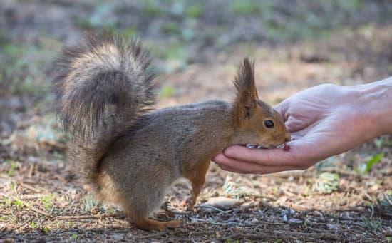 do squirrels bite