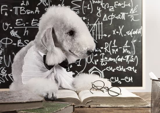 Bedlington Terrier breed of small friendly dog
