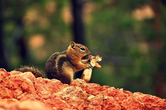 A squirrel eating wild mushrooms in the wild