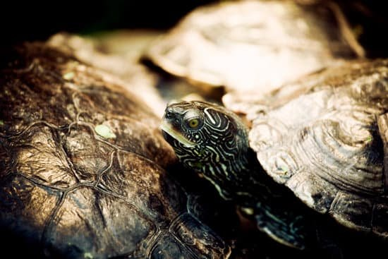 Lethargy Level Is A Turtle Sick Sign