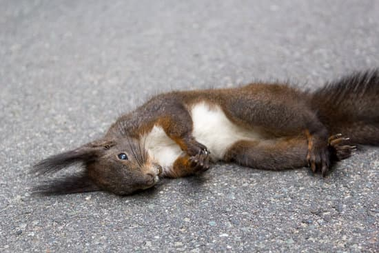 squirrels themselves are not toxic to dogs
