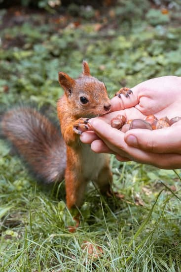 A man hand feeding a squirrel