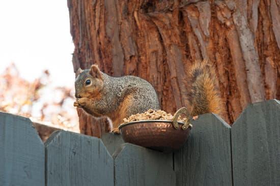 Squirrel Diet As Pets