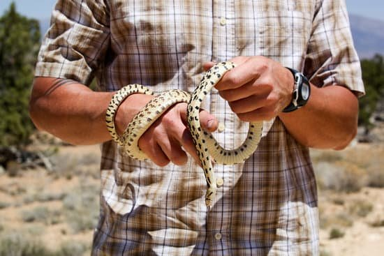 a man holding a baby bull snake