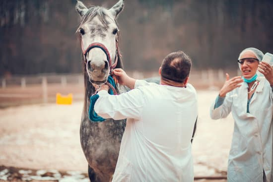 When You Need A VET For Your Horse?