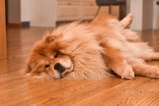chow chow make good family dogs