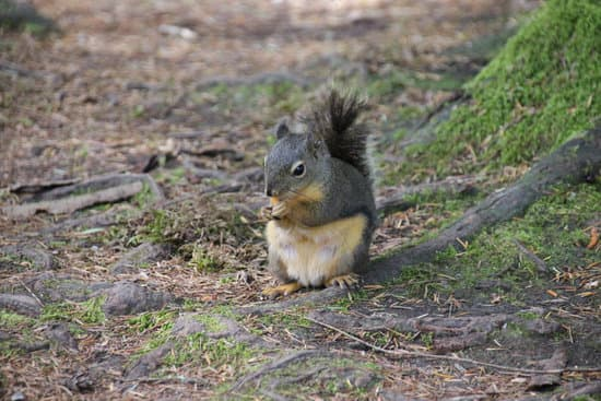 Get Rid Of Wild Squirrels to avoid fleas