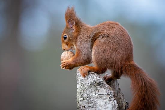 Squirrel Diet And Habitat