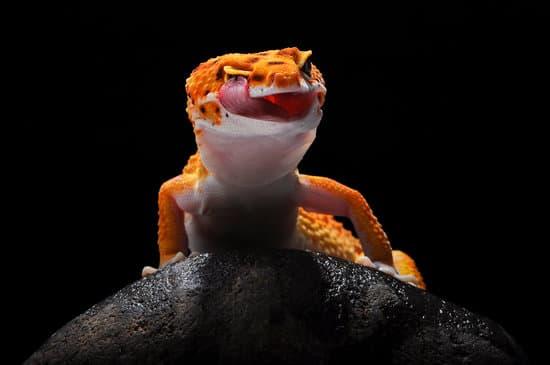 A scared leopard gecko screaming in the dark