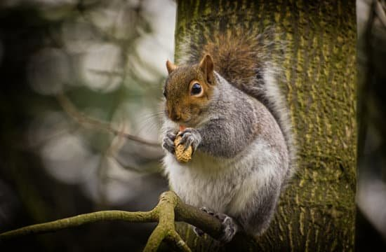 How Much Do Squirrels Eat?
